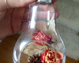 FloralBulb by Lauren Sciascia