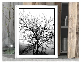 tree art print download tree poster tree photo printable woodland print woodland poster woodland photo  nature photography home decor print