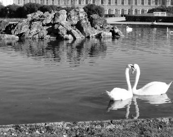 Swans In the pond 8x10 Germany