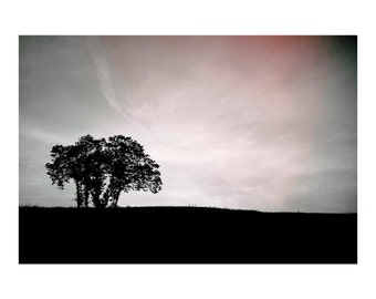 Solitude with Friends Photograph, Tree in the field, with sky gently wrapping its Solitude