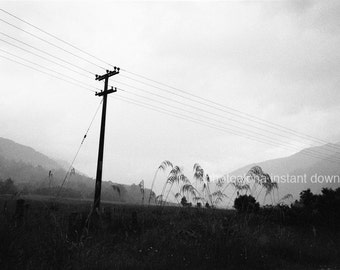 Road in New Zealand black and white, foggy road, power pole, fine art photography, art print, background