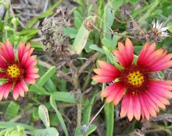 Flower Set 1 Foto 5