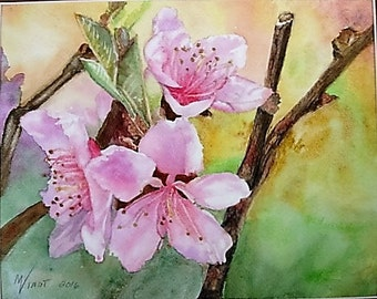Cherry Blossoms  8x10 Original Watercolor Pink Flowers spring peach apple