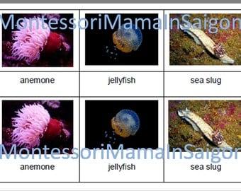 Marine Animals Montessori three part vocabulary cards