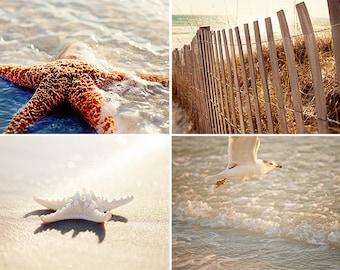 beach photography collection, cottage art, starfish decor, seagull photos,  starfish art, beach decor, ocean photography beach no 3