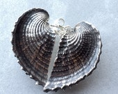 Large HEART cockle shell studs sterling silver seashell wing post earrings