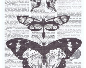 Butterfly study.Antique Book Page,Vintage Insect.Illustration.flying.office.home decor.gift.birthday.mom.french.paris.winged.collage art.eco