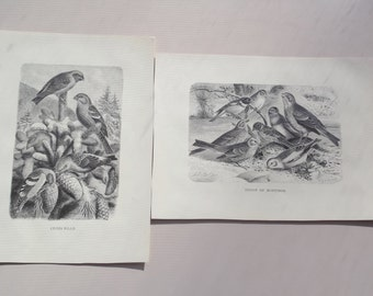 Two G Metzel prints Group of Buntings and Cross Bills pair monochrome black and white antique prints engraved  X.J. v. K. Jahrmargt 1898