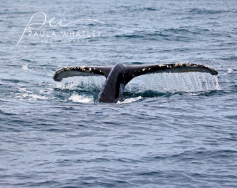 humpback whale photo, ocean art, nursery decor, whale art, whale decor, whale tail photo, whale tail art, Whale photo, whale photograph