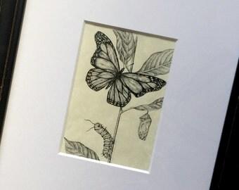 Framed Monarch Study Art, Original Monarch Ink Drawings, Monarch Butterfly Caterpillar Drawing, Framed Butterfly Crysalis Caterpillar Art
