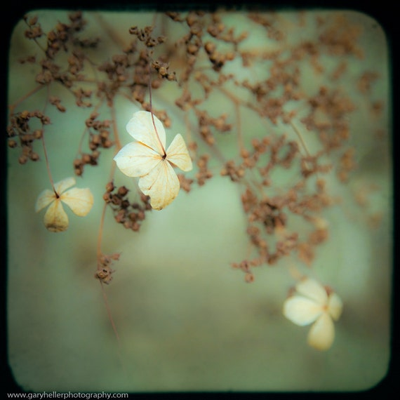 Little Things in Life, Flowers, Nature, Color Photograph, Soft, Dreamy, Floral, Green, White, Square Format, Original Signed Print