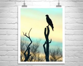 Hawk Art, Bird Photography, Sunset Picture, Wildlife Art, Pastel Art, Silhouette Art, Tucson Arizona, Tohono, Sky Art, Murray Bolesta