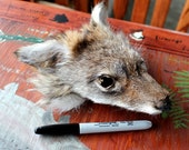 Coyote PUP shaped face for crafts, taxidermy practice, display, more DESTASH