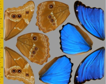 Medium Blue Morpho Butterfly Wings Fabric, Make Your Own Halloween Costume, 100% Cotton Woven Fabric