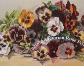 Art Print, French Ruffled Pansies, Half Yard Long, Grace Barton Allen, Shabby Chic Decor, Wall Art