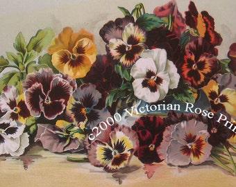 French Ruffled Pansies Print Half Yard Long Pansy Flower Grace Barton Allen