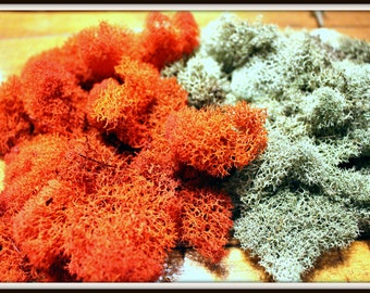 Reindeer moss-Preserved moss-Deer foot moss 2 oz bag in your color choice
