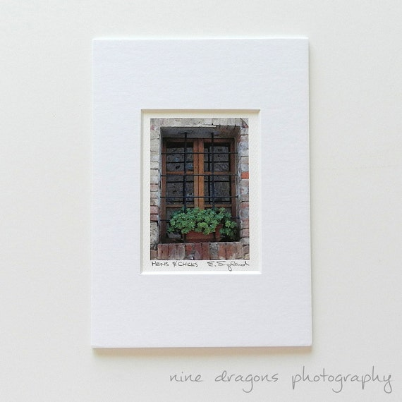 Italian Window Photography, Miniature Art Matted, Rustic Italian Art, Italy Wall Art, Succulent Flower Photography,Italy Print Hens & Chicks