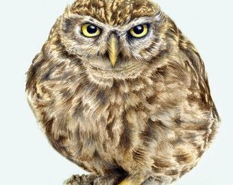 Little Owl - Watercolour Art Print (8 x 12 inches)