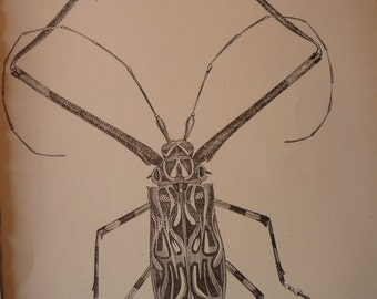Vintage - Long armed Beetle - 1888 etching -  - Natural world framable - gift for insect lover - framable for garden room