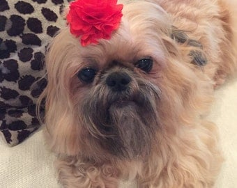 Red Satin and Tulle Flower Dog Puppy Bow Barrette