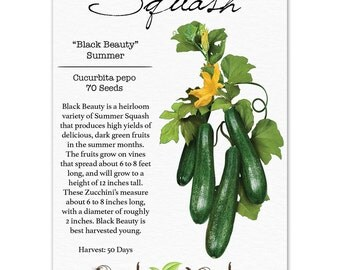 Squash Seeds, Black Beauty Zucchini (Cucurbita pepo) Non-GMO Seeds by Seed Needs