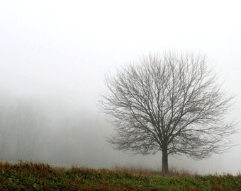 Tree in Fog, Nature Photography, Brown and White, 8X10 Mat, Ready to Frame, Wall Hanging