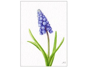 Muscari ACEO Original Watercolor Painting, Floral Art, Grape Hyacinth Flower, Miniature Painting, Miniature Art, Flower Painting, Spring