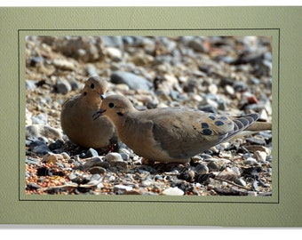Dove Cards - Mourning Dove Card - Blank Inside - Dove Note Cards - Mourning Dove Notecards - Custom Bird Cards - Doves