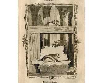 1792 ANTIQUE BAT ENGRAVING original antique print -  bull dog bats