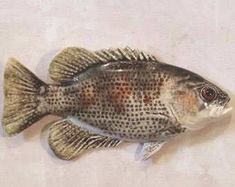 Rock Bass - Black and Yellow - 52208