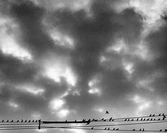 Birds On A Wire, 2015