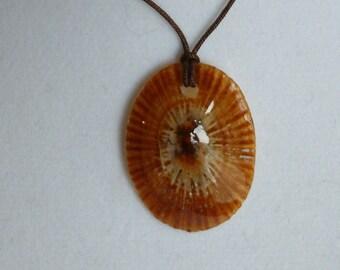 Hawaiian Opihi Shell