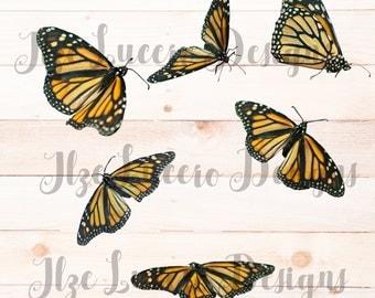Butterfly Monarch Clip Art PNG file Digital Photo Prop / Overlay / Digital Scrapbooking