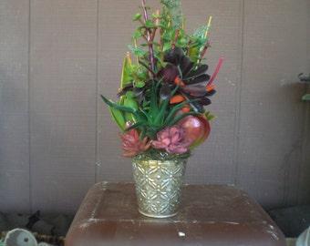 Living Growing Succulent Arrangement