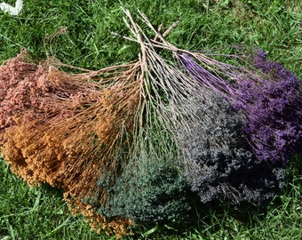 SALE! Multi-Color Broom Bloom 5 Bunches