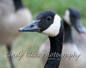 Goose photo card, photo note card, blank card, Wildlife photo card, Bird photography, bird card, Bird Stationary, greeting card, Goose