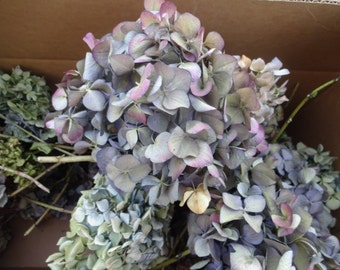 Dried Hydrangeas   Large Box Of Hydrangeas    Flowers For Wreaths   Hydrangeas  Wedding Flowers   Hydrangeas