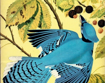 The How and Why Wonder Book of Birds , 1960's Wonder book by Robert Mathewson , Paperback Science Book for Children