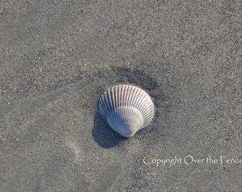 Beach Photography Single Shell on Pacific Ocean Copalis Beach Handcrafted photo card