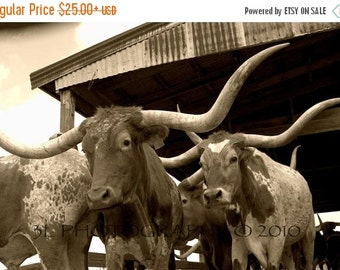 SALE Longhorn Western Rustic Texas Fine Art Photography Print