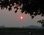 Digital Download Photo Magenta Sun Framed by Blackened Leaves