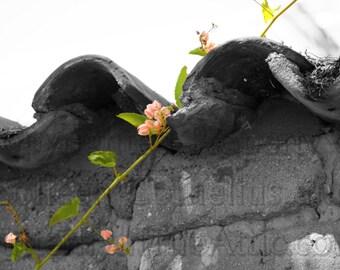 Terra Cotta & French Fuchsia Black and White Photograph Brilliant Pink Flowers Vine