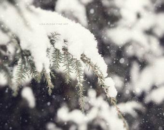Snow Print or Canvas Wrap, Winter Decor, Woodland Decor, Winter Decorating, Snowy Evergreen, White Cream Green Grey Woodland Snowfall.