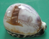 "Sea Shelsl 3.6"" Seashell Lighthouse Carved Tiger Shell"