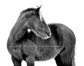 Horse Photos, Horse Pictures, Equine Art, Black and White, Pictures of Horses, Rockies, Portraits