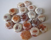 Snakeskin agate coin beads/agate bead/jewelry making supply