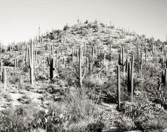 Desert Cactus Photography Print Fine Art Arizona Saguaro Cacti Mountain Black and White Rustic Winter Landscape Photography Print.