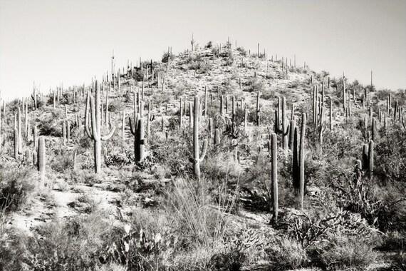 Desert Cactus Photography Print Fine Art Arizona Saguaro Cacti Mountain Black and White Rustic Winter Landscape Photography Print.