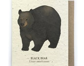 Black Bear Greeting Card - Plantable Seed Paper - Blank Inside